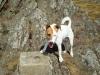 micul-alpinist-pe-vrful-semenic