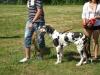 dog-german-arlechin