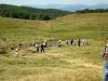 baia-vulturilor-semenic-2012