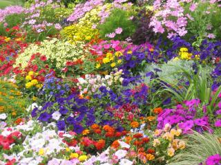 flori pentru 8 Martie