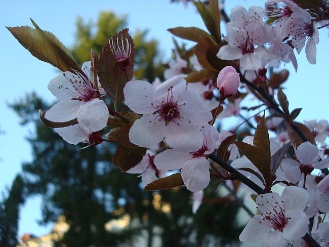 La Multi Ani Florilor din viata noastra !