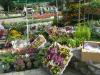 flori, multe flori